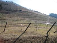 可可农场葡萄酒酿造厂