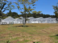 Le Jardin de la Fraise « Choku