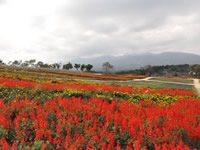 Nasu Flower World