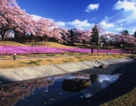 Le Parc de Nagaminé