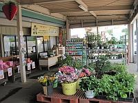益子观光草莓农业园