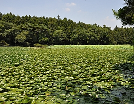 Tatara Marsh
