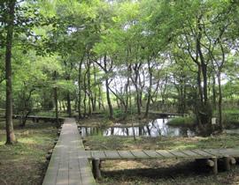 Le parc Isokawa-Ryokuchi-kôen