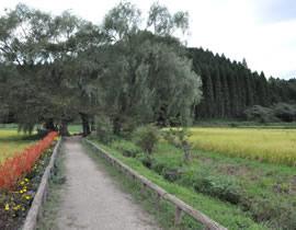 Yugyoyanagi