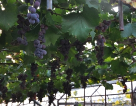 La zone de vignobles