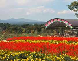 Nasu Flower World