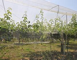 La ferme fruitière Kaneda Kajuen