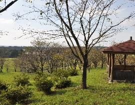 Le parc Fujiyama Shizen-Kôen