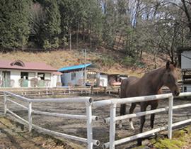 Nikko Equestrian Club